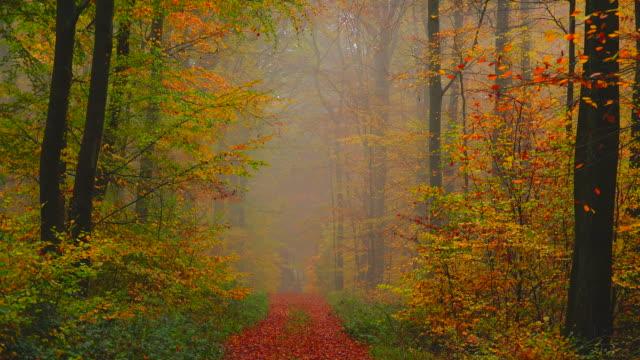 autumnal beech forest - abwesenheit stock-videos und b-roll-filmmaterial