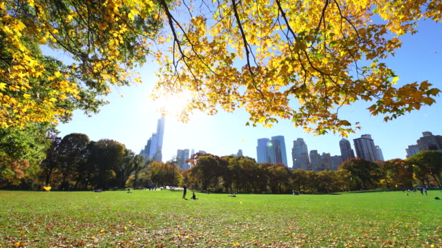 tu autumnal color fallen leaves are fluttering down over the sheep meadow.sunlight illuminates the meadow and leaves of autumnal trees. - sheep meadow central park stock videos and b-roll footage