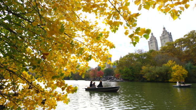 vidéos et rushes de autumnal color tree and fallen leaves over the path at central park. - bateau à rames