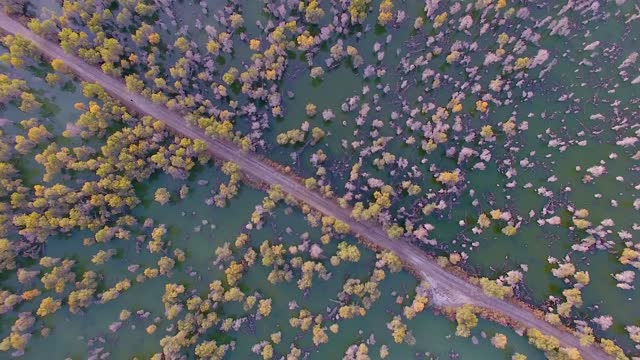 autumnal drone aerial video of 3.77 million mu of populus euphratica forest on the edge of taklimakan desert, kuqa city, xinjiang. - desert area stock videos & royalty-free footage