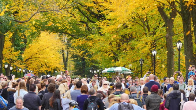 PAN Autumnal fallen leaves are fluttering down over the crowd at The Mall, which are surrounded by rows of autumnal color trees.People are watching street performance.