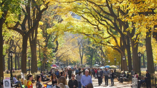 tu autumnal fallen leaves are fluttering down over the people at the mall, which are surrounded by rows of autumnal color trees. - central park manhattan stock videos and b-roll footage