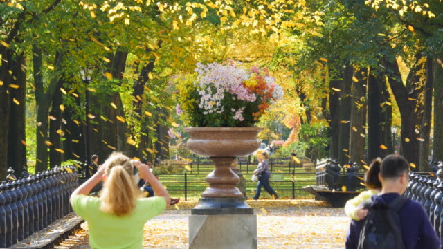 tu autumnal fallen leaves are fluttering down over the potted flowers and people, which are surrounded by autumnal color trees. - bench stock videos & royalty-free footage
