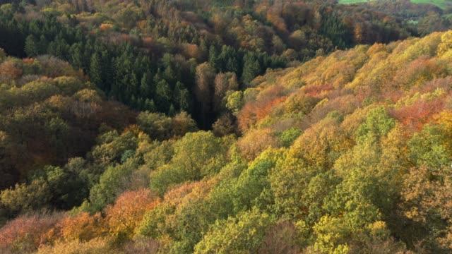 autumnal forest - north rhine westphalia stock videos & royalty-free footage
