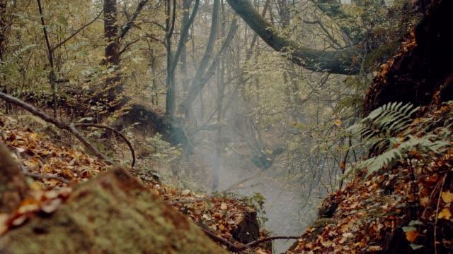vídeos de stock e filmes b-roll de autumnal forest with fog and ferns - samambaia
