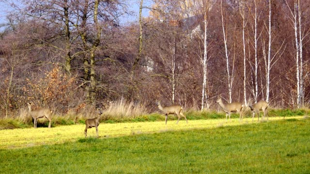 Autumnal landscape with deer on the fields