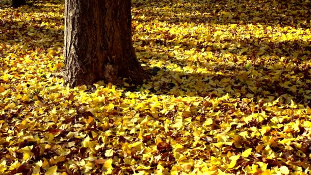 秋の葉の 1   - 秋点の映像素材/bロール