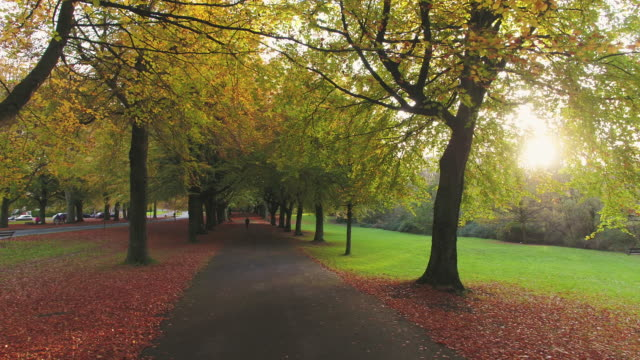 avenue of beech trees along the promenade in the autumn, clifton, bristol, england - diminishing perspective stock videos & royalty-free footage