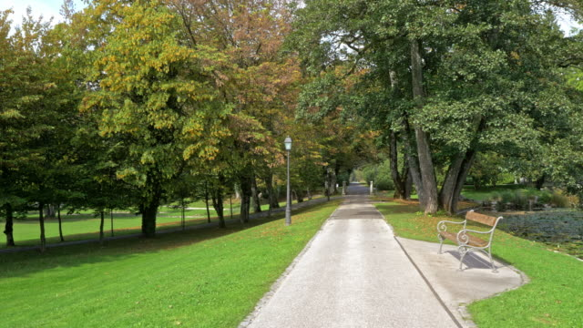AERIAL Avenue of trees in a park by the lake