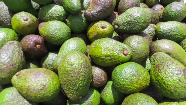 avocado - heap stock videos & royalty-free footage