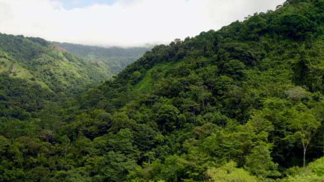 avs rainforest in costa rica - aerial view stock videos & royalty-free footage