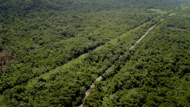 avs rainforest in mexican state of chiapas - chiapas stock-videos und b-roll-filmmaterial