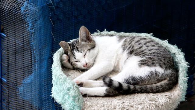 Awakening cat before sleeping