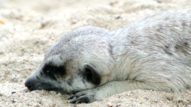 vídeos de stock, filmes e b-roll de de acordar - animal behavior