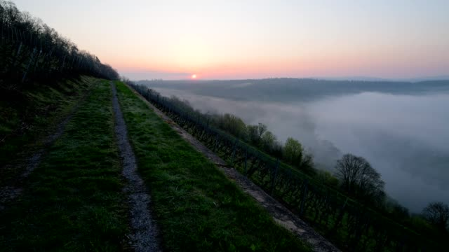 away in vineyard with river main at sunrise, kreuzwertheim, bavaria, germany - バイエルン州点の映像素材/bロール