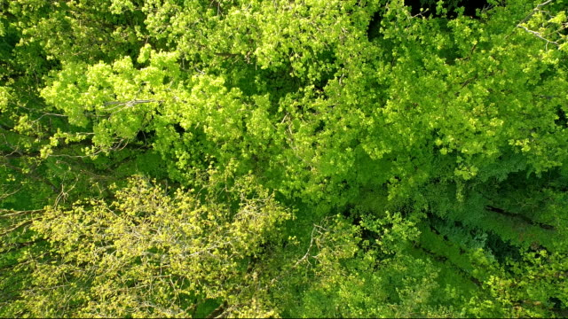 Awesome Deciduous forest aerial view