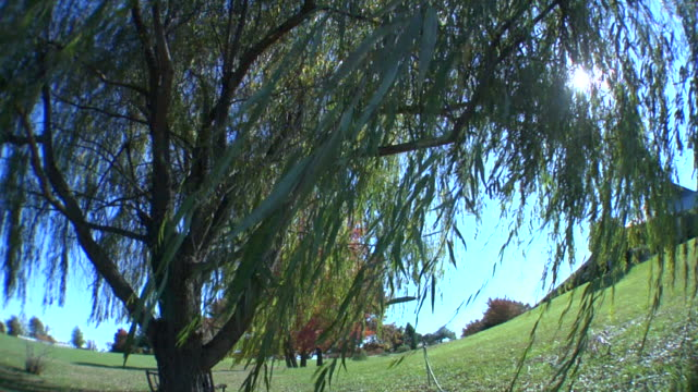 最高の木の吹く風 - 葉状体点の映像素材/bロール