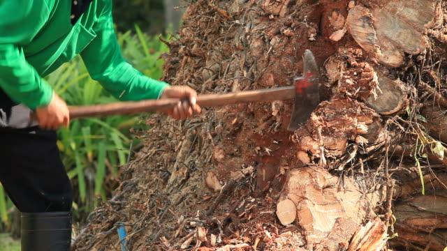 Ax cut the tree HD1080p