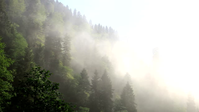 HD: Ayder Plateau,Forest and Fog,**Time Lapse**, Rize, TURKEY
