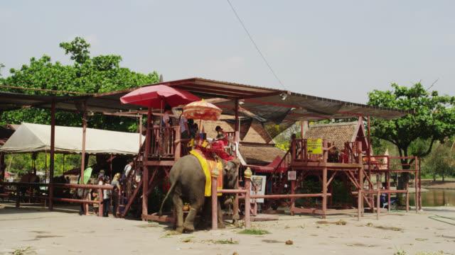 ayutthaya elephant camp - 働く動物点の映像素材/bロール