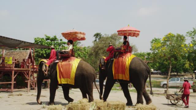 vídeos de stock, filmes e b-roll de ayutthaya elephant camp - grupo pequeno de animais