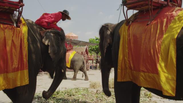 ayutthaya elephant camp - animale da lavoro video stock e b–roll