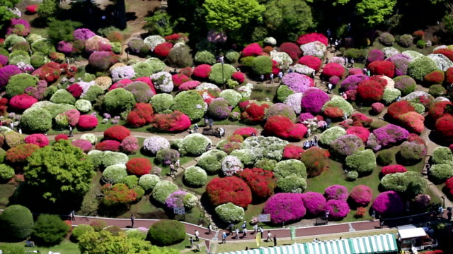 Azaleas and rhododendrons in the lakeside hotel of Lake Ashinoko in Hakone are full bloom