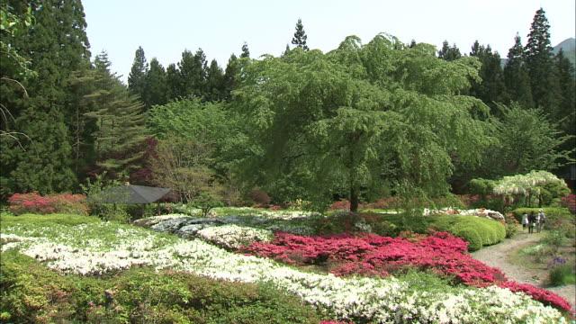 vidéos et rushes de azaleas and trees fill a lush garden. - parterre de fleurs