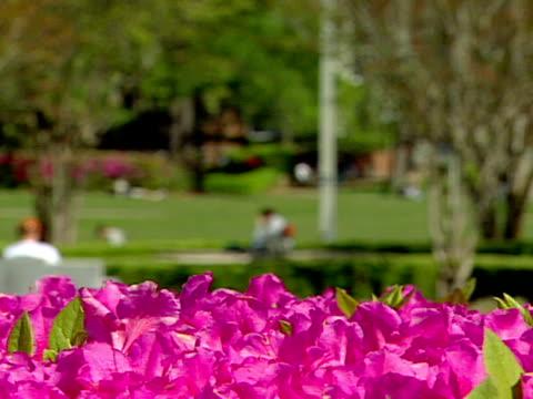 azaleas fg o/f green bg rack focus campus grass common area w/ students sitting reading walking w/ flowers xcu fg - florida us state stock videos & royalty-free footage