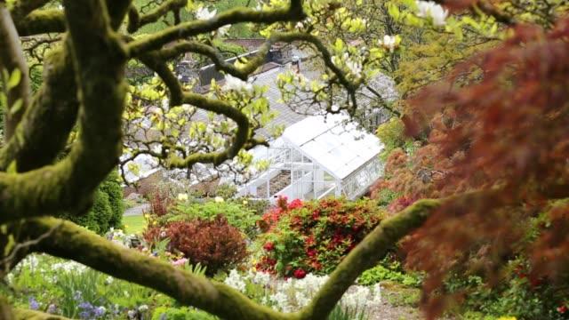 azaleas in holehird gardens, windermere, uk. - bush stock videos & royalty-free footage