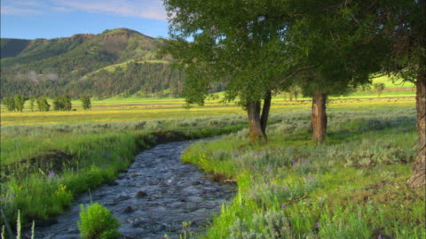 ws, babbling brook running through green field with trees along bank, lamar valley, yellowstone national park, wyoming,  usa - flowing water stock videos & royalty-free footage
