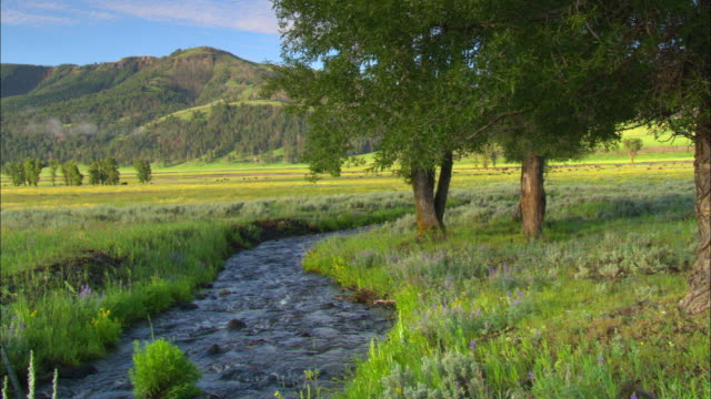 WS, Babbling brook running through green field with trees along bank, Lamar Valley, Yellowstone National Park, Wyoming,  USA