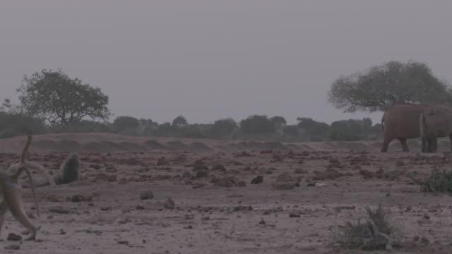 baboon and elephant / africa - 有名原生地域点の映像素材/bロール