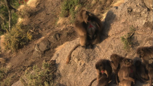 Baboons in the mountains