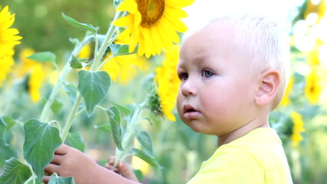 baby and sunflower - one baby boy only stock videos & royalty-free footage