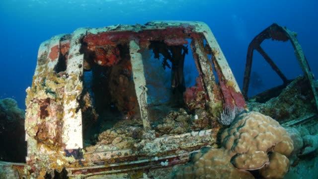 Baby batfish hiding in sea wreck of seaplane undersea, Palau