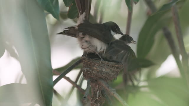 baby bird exercise on nest slow motion - young bird stock videos & royalty-free footage