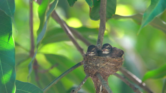 baby bird sleep in nest - bird's nest stock videos & royalty-free footage
