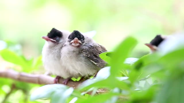 baby birds waiting mother