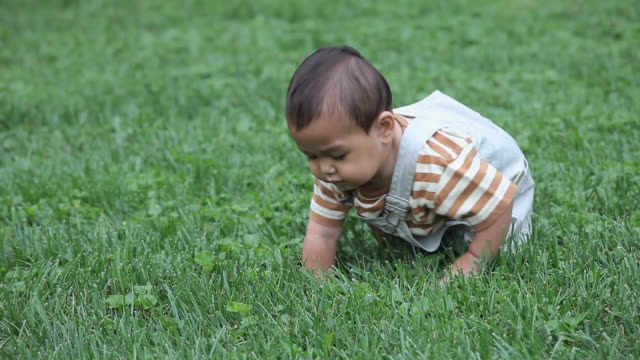 MS ZO Baby boy (6-11 months) attempting to stand or crawl in grass / Richmond, Virginia, USA.