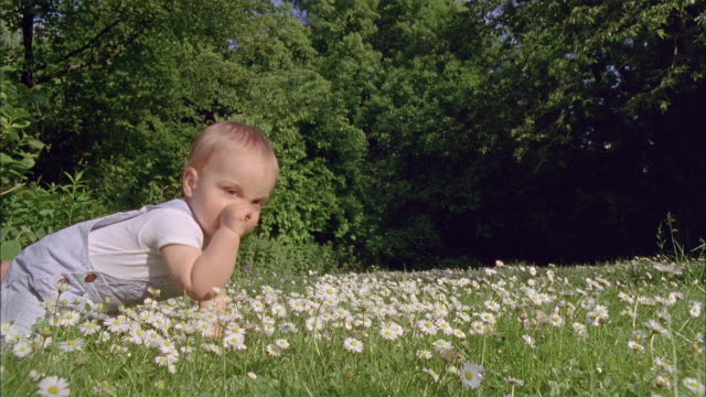 ms slo mo baby boy (18-23 months) crawling in meadow / brussels, brabant, belgium - 18 23 months stock videos & royalty-free footage