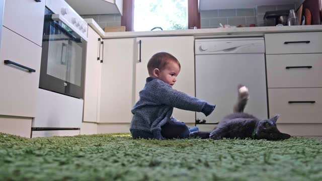 baby boy plays with cat - fragility stock videos & royalty-free footage