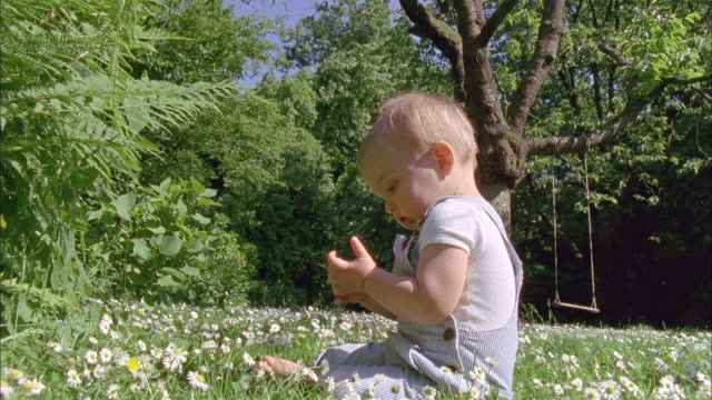 ws slo mo baby boy (18-23 months) sitting in meadow / brussels, brabant, belgium - 18 23 months stock videos & royalty-free footage