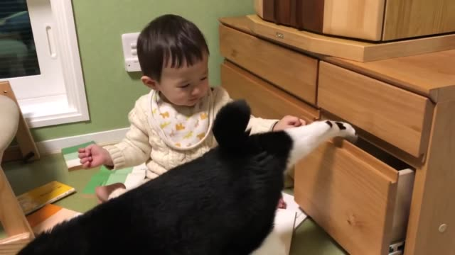 baby boy took out all books from the drawer, then mei-chan the cat went inside it. he was so happy to close and open the drawer with mei-chan inside! - drawer stock videos & royalty-free footage