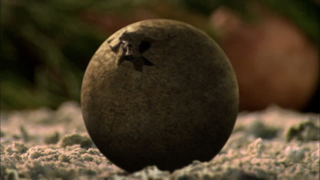 CGI, CU, Baby Brontosaurs  hatching from egg
