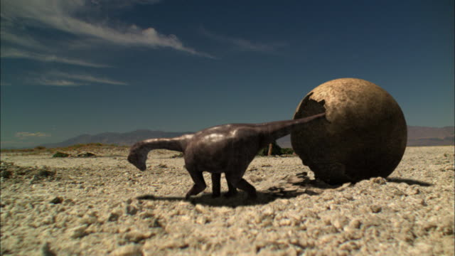 CGI, MS, PAN, Baby Brontosaurs leaving egg shell and walking on ground