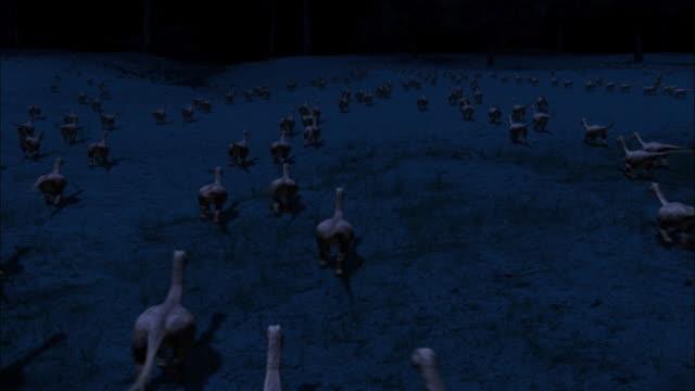 vídeos de stock, filmes e b-roll de cgi, ws, ha, baby brontosauruses running through field at night, rear view - jurássico