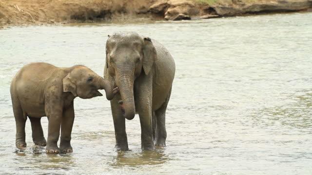 baby und mutter elefant - elefant stock-videos und b-roll-filmmaterial