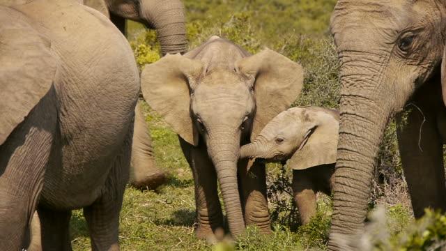 baby-Elefanten in einer Herde