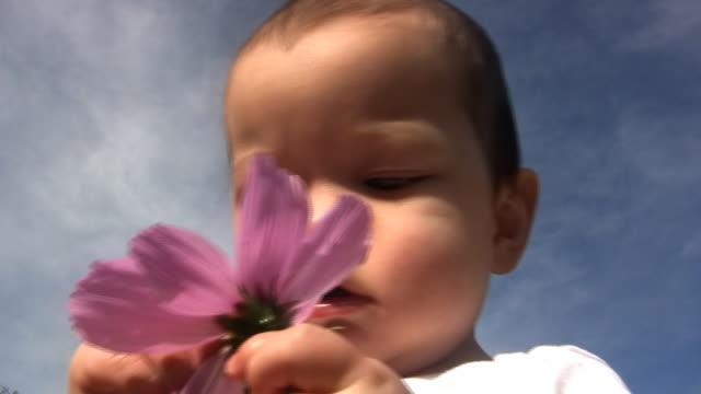 vídeos de stock, filmes e b-roll de bebê flor v.2 (hd - só bebês meninos